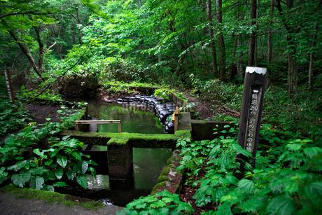 蔦温泉沼めぐり遊歩道と標識の写真素材 [FYI02653720]
