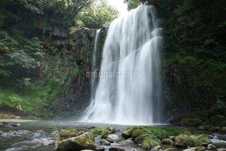 桜滝の写真素材 [FYI02653725]