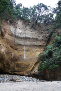 伊豆の竜宮窟の崖の写真素材 [FYI02653731]