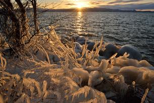 夕日と猪苗代湖の湖畔の凍りついた草木の写真素材 [FYI02653775]