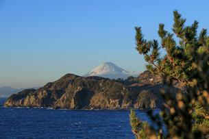 黄金崎公園から富士山を望むの写真素材 [FYI02653782]