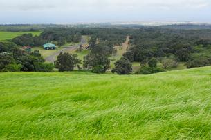 ハワイ島のハワイ火山国立公園 カフクユニット のトレイルの写真素材 [FYI02653830]