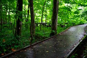 奥入瀬渓流の遊歩道の写真素材 [FYI02653850]