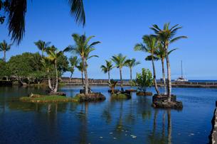 ハワイ島 マウナラニのカラフイプアアフィッシュポンドの写真素材 [FYI02653855]