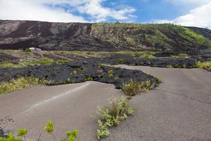 ハワイ島 キラウエア火山のアラヌイカヒコの写真素材 [FYI02653877]