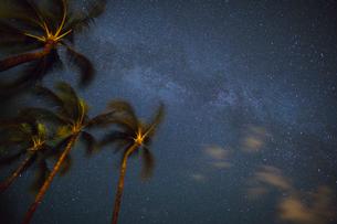 ヤシの木と天の川の写真素材 [FYI02653899]