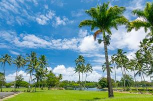 ハワイ島ヒロのワイロア川州立公園の写真素材 [FYI02653910]