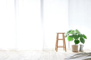窓とカーテンとスツールと観葉植物の写真素材 [FYI02653931]