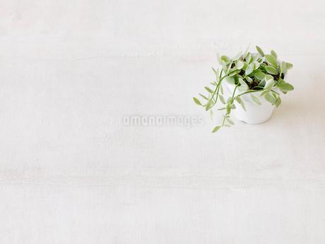 観葉植物の写真素材 [FYI02653934]