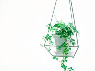 観葉植物の写真素材 [FYI02654089]