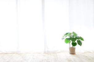 窓とカーテンと観葉植物の写真素材 [FYI02654100]