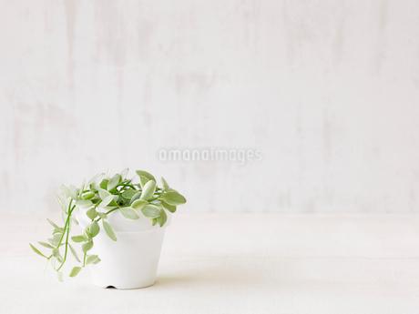 観葉植物の写真素材 [FYI02654168]