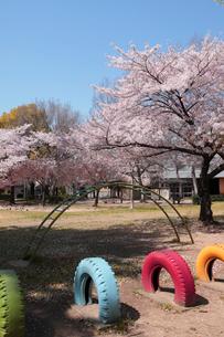 大淀中公園の桜の写真素材 [FYI02654285]