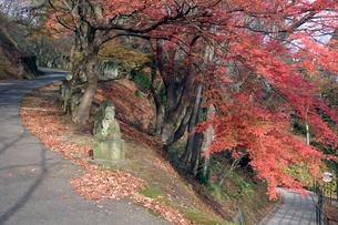 西山公園の写真素材 [FYI02654321]