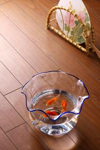 フローリングに置かれた金魚鉢の写真素材 [FYI02654326]