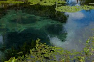 澄んだ水の湧き出す泉の写真素材 [FYI02654328]