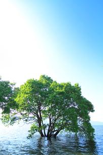 琵琶湖に写る木の写真素材 [FYI02654447]