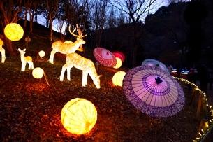 るり渓温泉,京都イルミエ-ル,天空の森の写真素材 [FYI02654451]