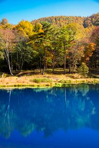 青い池と黄葉の写真素材 [FYI02654509]