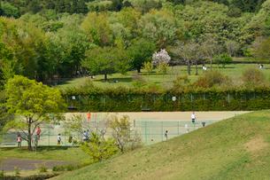 新緑の牧之原公園,テニスコートの写真素材 [FYI02654626]