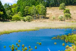 霧ヶ峰高原 春の踊場湿原アシクラの池の写真素材 [FYI02654656]