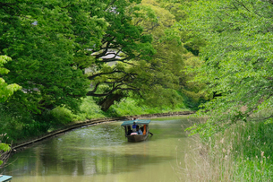 大聖寺川流し舟の写真素材 [FYI02654783]