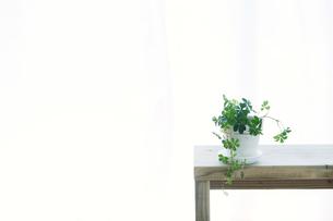 窓辺に置いたベンチと観葉植物とカーテンの写真素材 [FYI02654792]