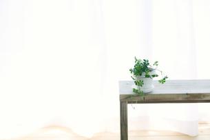 窓辺に置いたベンチと観葉植物とカーテンの写真素材 [FYI02654804]