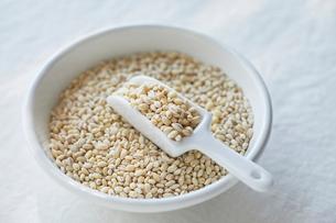 もち麦の写真素材 [FYI02654833]