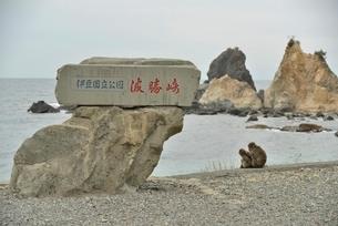 海岸にいる猿の写真素材 [FYI02654887]
