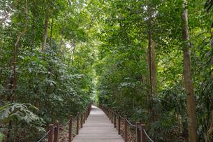 シンガポール・ボタニック・ガーデンの写真素材 [FYI02654925]