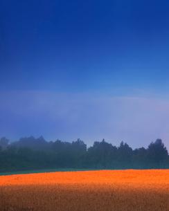 赤く染まる小麦畑 ホクシンの写真素材 [FYI02655003]