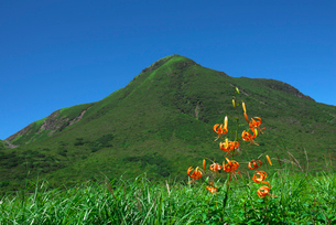 三俣山を背景にオニユリの写真素材 [FYI02655043]