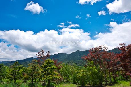 耳納連山の写真素材 [FYI02655069]
