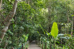 シンガポール・ボタニック・ガーデンの写真素材 [FYI02655325]