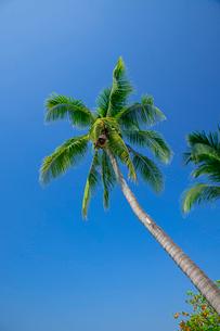 アオナンビーチの写真素材 [FYI02655399]