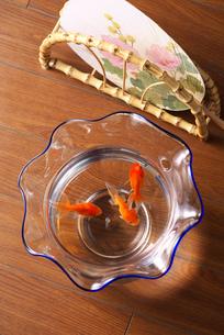 フローリングに置かれた金魚鉢の写真素材 [FYI02655402]