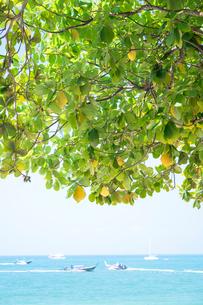 アオナンビーチの写真素材 [FYI02655403]