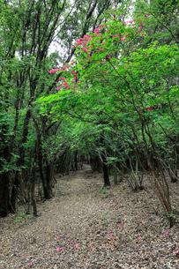 熊野古道大辺路の長井坂の写真素材 [FYI02655570]