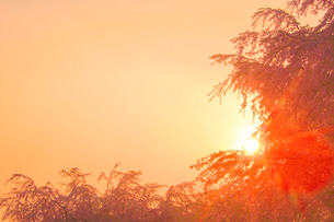 桜と朝日の木もれ日の光芒の写真素材 [FYI02655637]