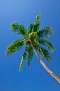 アオナンビーチの写真素材 [FYI02655664]