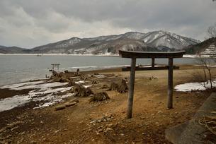 湖上に現れた大山祗神社参道脇の伐株と鳥居の写真素材 [FYI02655708]