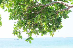 アオナンビーチの写真素材 [FYI02655720]