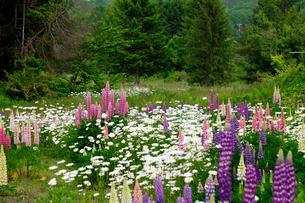 花畑の写真素材 [FYI02655788]