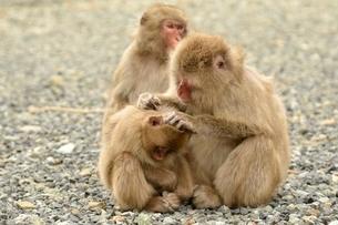 猿の写真素材 [FYI02655792]