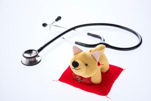 ペット医療イメージの写真素材 [FYI02655848]