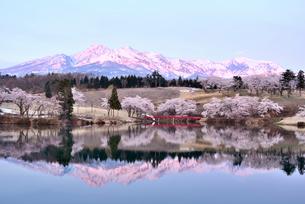 妙高山と松ヶ峯周辺の桜の写真素材 [FYI02656125]