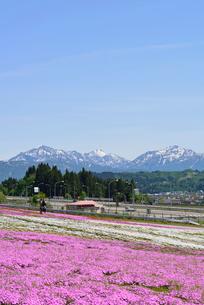 花と緑と雪の里公園の芝桜の写真素材 [FYI02656161]