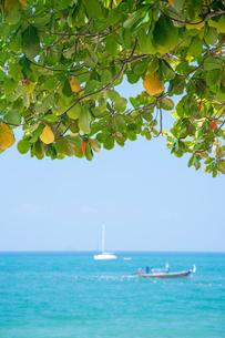 アオナンビーチの写真素材 [FYI02656225]