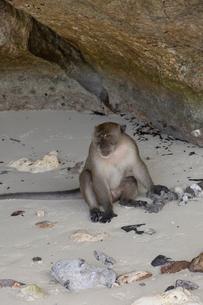 モンキービーチの写真素材 [FYI02656754]